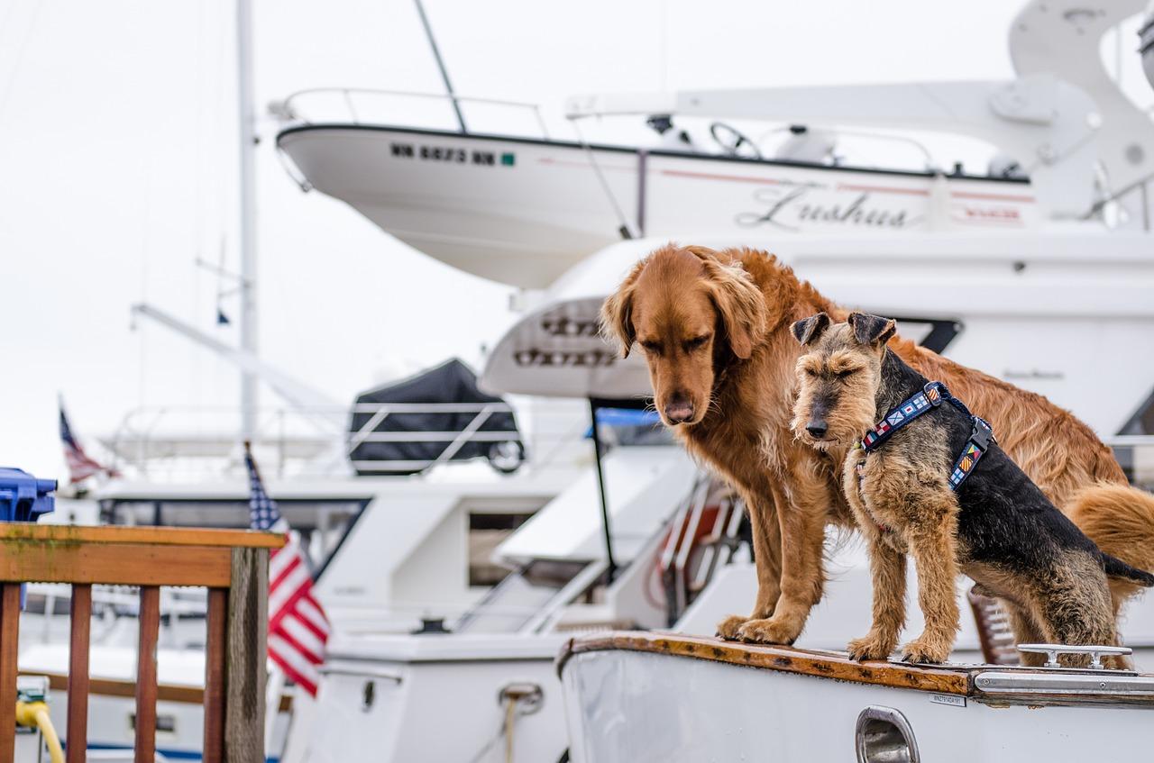 Bei einer Kreuzfahrt mit Hund muss auf den vierbeinigen Begleiter nicht verzichtet werden