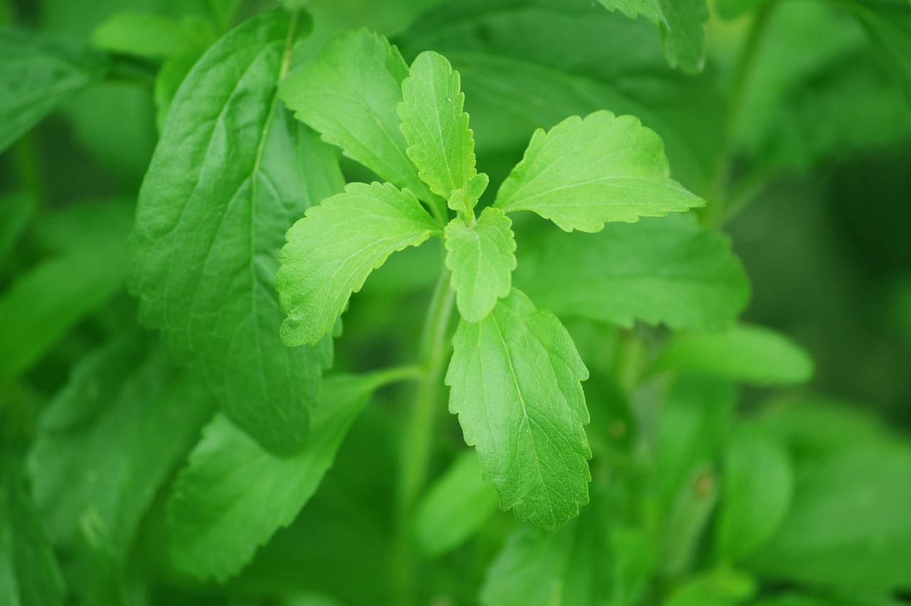 Stevia - die gesunde Alternative zu Zucker